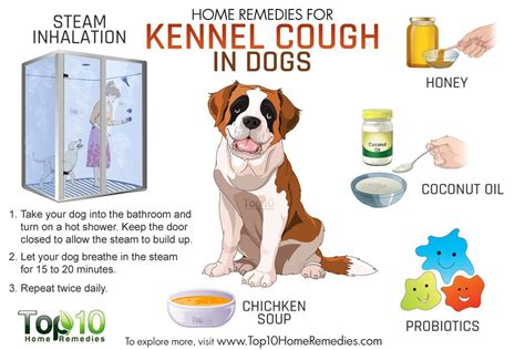 cough suppressors for dogs picture 22