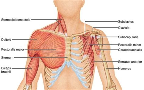 pectoral stretch on mastectomy picture 1