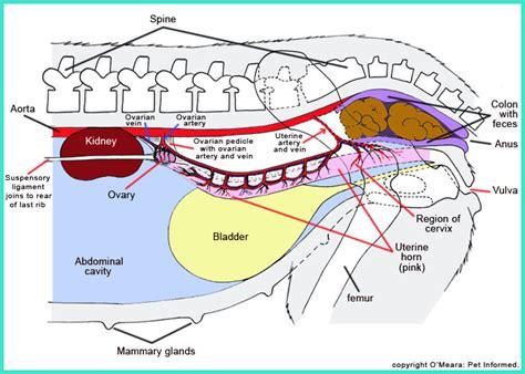 colon little knots in stomach picture 13