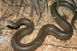 actual pictures of snakes h picture 1