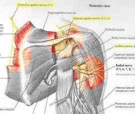 autoimmune axillary pain picture 2