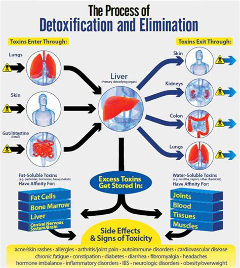 detox effect on the liver picture 3