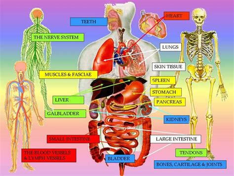 what is gall bladder picture 15