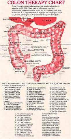 colon chart picture 3