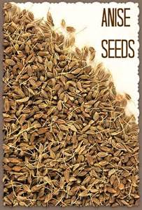 fennel seed picture 3