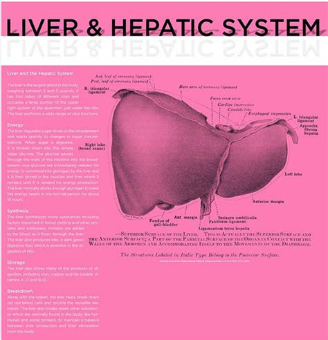 liver pattern of referral picture 3