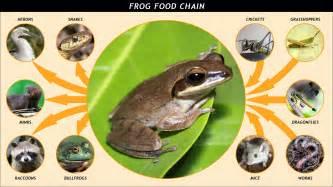 amphibian diet picture 6