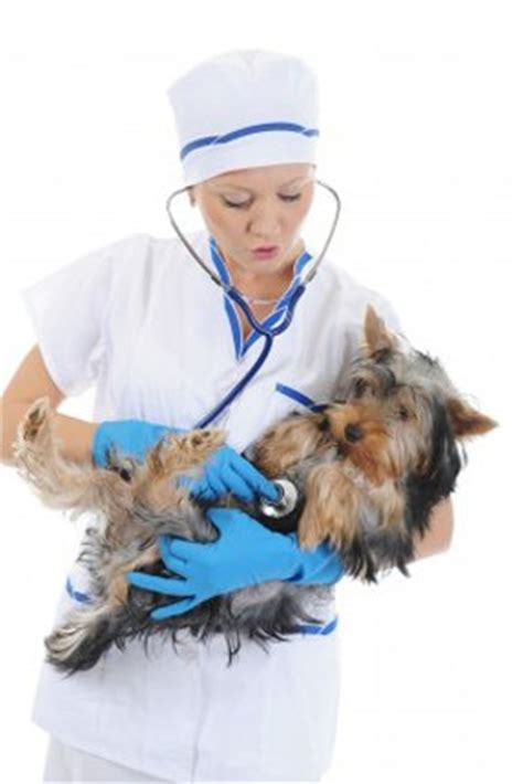Dogs low blood pressure picture 11