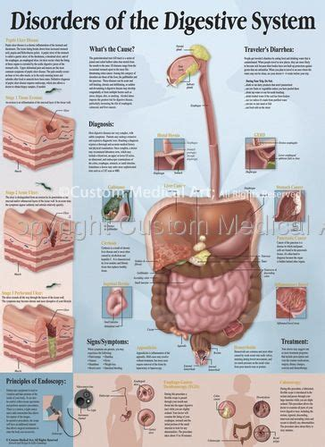 skin and systemic gastrointestinal diseases 13 picture 1