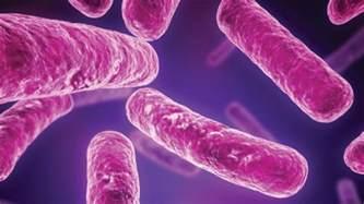 cdiff colon bacteria picture 6