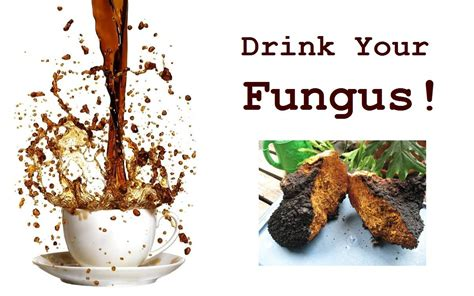 coffee that cures fungus picture 1