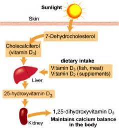 cod liver oil and vitamin k picture 7