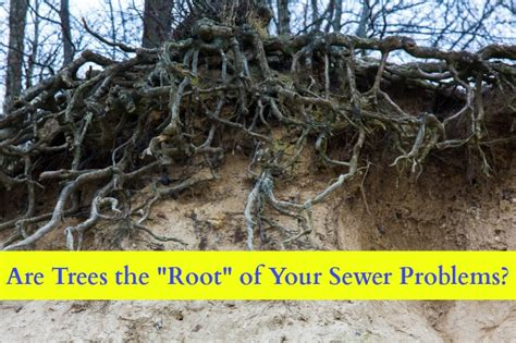 stop roots growing picture 3