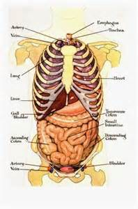 benefits of ox bile weight loss picture 4