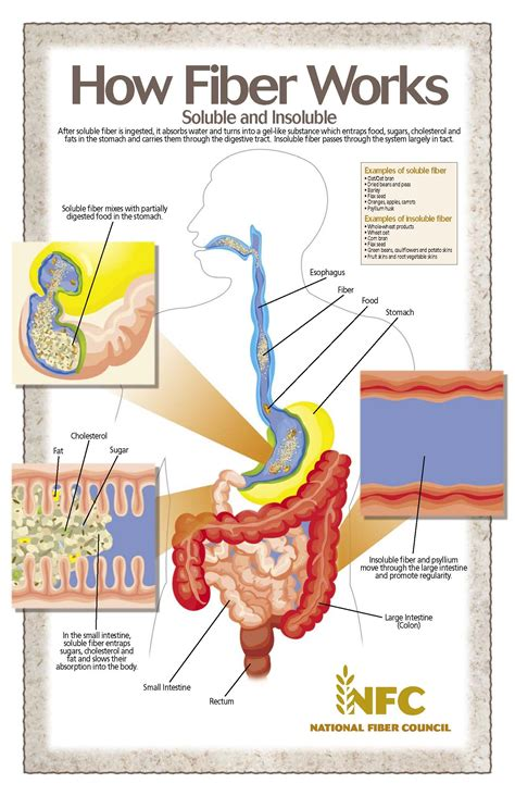 foods that cleanse your colon picture 15