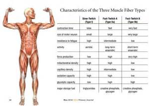 which type of lipo 6 can make muscles picture 5