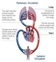 best for blood flow picture 1