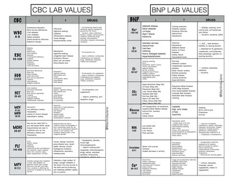complete blood count flow sheet picture 9