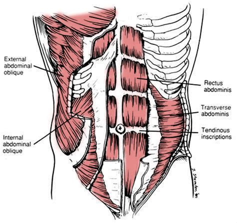 muscle pain in stomach when el movement picture 13