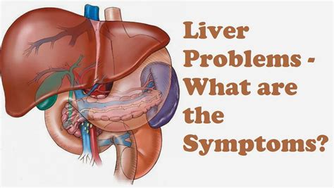 where is the liver in the body picture 6
