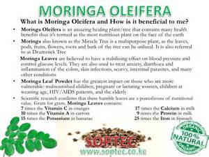 does moringa cure hiv picture 5
