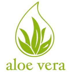 between aloe vera and mornga which one is picture 1
