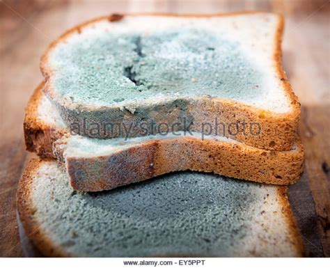 fungus on bread picture 11