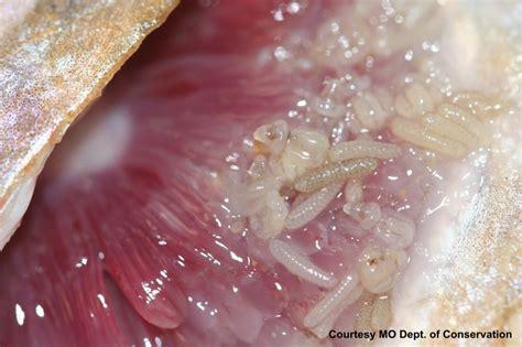cat skin diseases picture 6