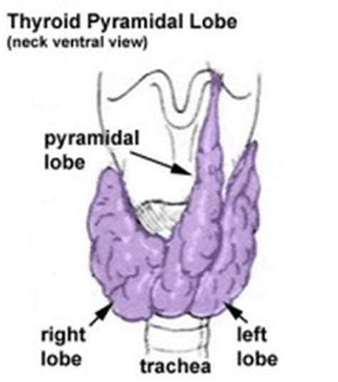 is 3mm of the thyroid isthmus good picture 10