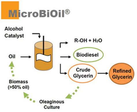 improvement of oil production using microbial enzymes picture 6