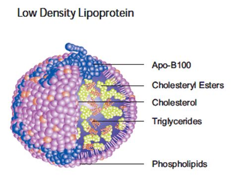 Cholesterol ldl lower picture 8