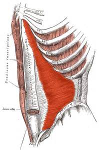Muscle pain in rib cage picture 2
