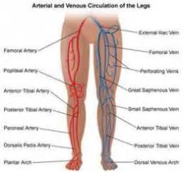 does tricor cause muscle pain in legs picture 10