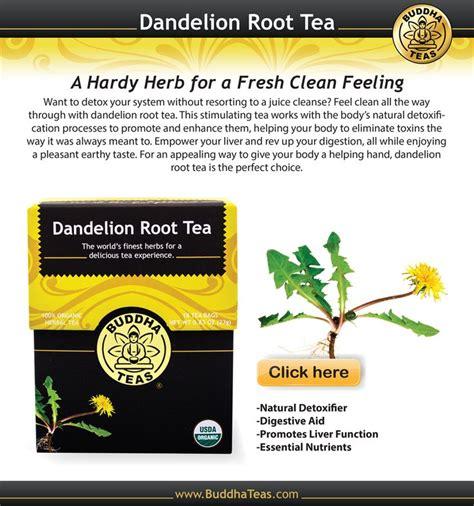 dandelion root tea for abdominal fat picture 2