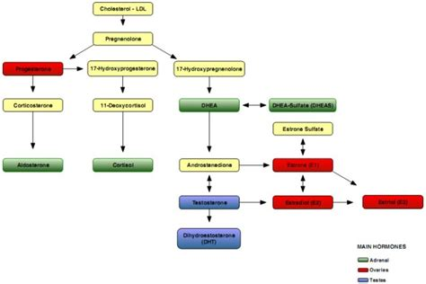 testosterone level symptoms picture 6
