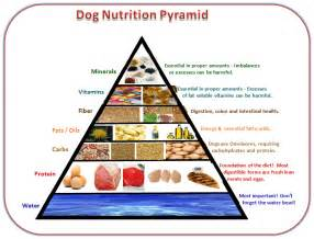 diet for canine picture 1