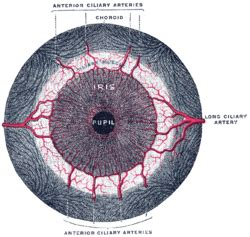 iflamation of the iris muscle picture 7