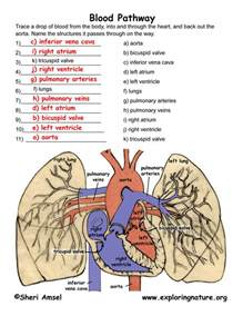 Blood flow picture 3