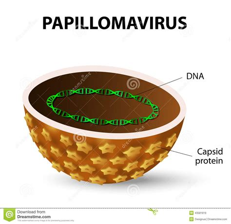 remove warts caused by human papilloma virus generic prices picture 10