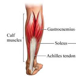 Injured calf muscle picture 10