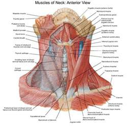 neck tension and thyroid picture 1