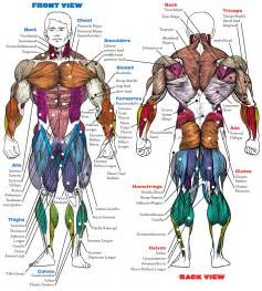 exercising muscle groups picture 2