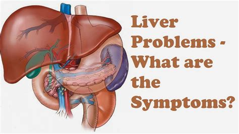 what side is the liver picture 1