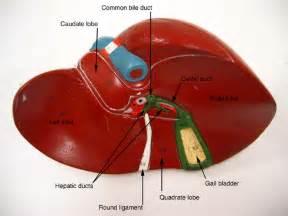 ga bladder cancer picture 17