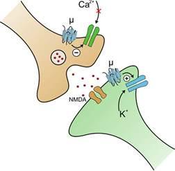 mu opiod receptor herbs picture 9
