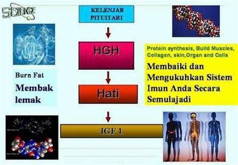 hgh malaysia untuk dijual picture 2