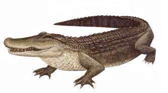 buy wholesale crocodile skin picture 14