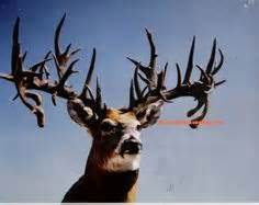world record world's biggest deer rack picture 6