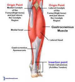 gastronemius muscle picture 1