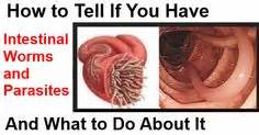 What do intestinal parasites and colon parasites look picture 1